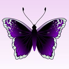 Free Butterfly Royalty Free Stock Images - 9271979
