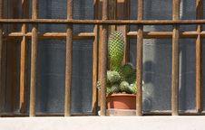 Free Flowerpot Stock Image - 9272321