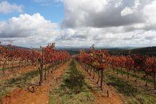 Free Autumn Vines Stock Photo - 9272390