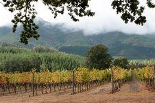 Free Vines Stock Image - 9272571