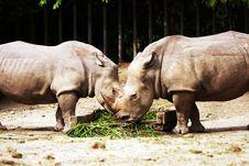 Free White Rhinoceros Stock Photos - 9273033