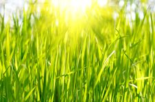 Free Green Grass Sunset Stock Image - 9275581