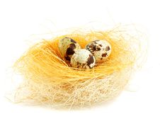 Free Eggs In A Nest Isolated Stock Photography - 9276662