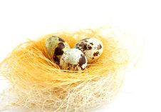 Free Eggs In A Nest Isolated Royalty Free Stock Photos - 9276718
