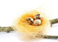 Free A Nest On A Branch Isolated Stock Image - 9276771