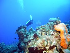 Free Coral Diver Stock Photography - 9278922
