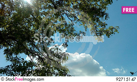 Free Heaven, The Leaves And The Pigeon Royalty Free Stock Photography - 92715147