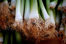Free Close-up Of Vegetables Stock Photography - 92710512