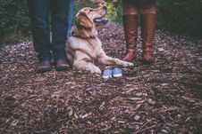 Free Dog Lying At Feet Of A Couple Royalty Free Stock Image - 92710836