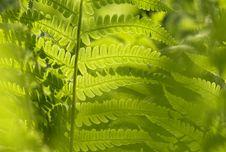 Free Vegetation, Plant, Ostrich Fern, Fern Royalty Free Stock Images - 92710859