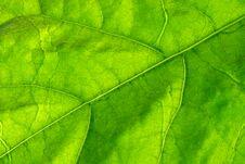 Free Green Leaf Stock Photo - 92723810