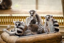 Free Lemur On Wooden Railings Stock Images - 92752914