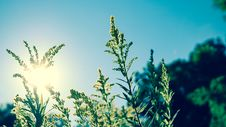 Free Green Plant Under Blue Sky During Daytime Stock Images - 92752944