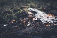 Free Mushrooms In Forest Stock Photography - 92753292
