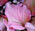 Free Frozen Leaf Royalty Free Stock Photo - 9280395