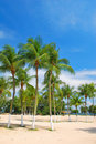 Free Tropical Coconut Trees Royalty Free Stock Image - 9282576