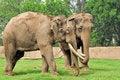 Free Indian Elephants Stock Photos - 9287553