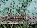 Free Before A Beehive. Stock Photos - 9287863
