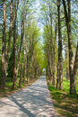 Free Lane In Park Stock Photography - 9288642