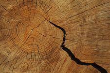 Free Cross Section Through Tree Log Royalty Free Stock Photography - 9280187