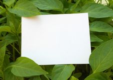 Free Card Blank Stock Photo - 9280850