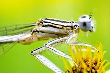 Free Dragon-fly Blue As Sky Of Eye Royalty Free Stock Images - 9281039