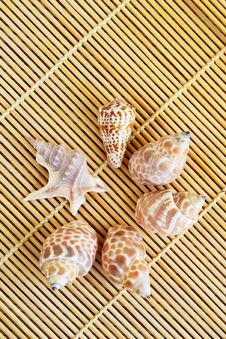 Free Close-up Of Seashells On A Bamboo Mat Royalty Free Stock Photos - 9281098