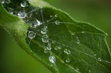 Free Curled Leaf And Spider S Web Stock Photography - 9281632