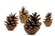 Free Pine Cones Royalty Free Stock Image - 9281736