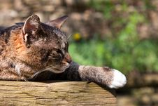 Free Sleeping Cat Royalty Free Stock Images - 9282059