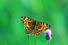 Free Butterfly Royalty Free Stock Images - 9282449