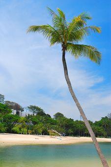 Free Tropical Coconut Tree Along A Beach Stock Photos - 9282493