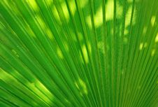 Free Palm Leaf Royalty Free Stock Image - 9284776