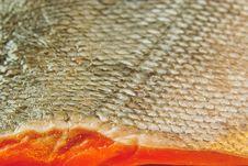 Free Fresh Fish Stock Photo - 9285040
