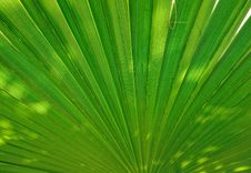 Free Palm Leaf Royalty Free Stock Image - 9285126