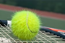 Free Shaggy Tennis Ball Stock Images - 9285634