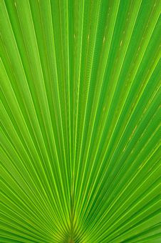 Free Palm Leaf Stock Photos - 9285673