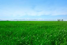 Free Sky And Grass Stock Photography - 9285872