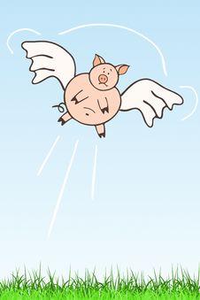 Free Flying Hog Stock Image - 9287821