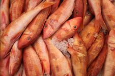 Free Red Fish On Ice Royalty Free Stock Images - 9289349