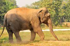Free Indian Elephant Stock Image - 9289421