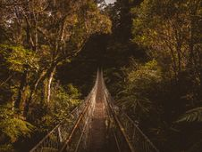 Free Hanging Bridge In Forest Royalty Free Stock Photos - 92801558