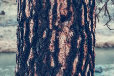 Free Tree Bark Stock Photos - 92881503