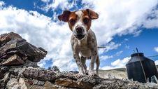 Free Dog On Rocky Ledge Royalty Free Stock Photo - 92881645