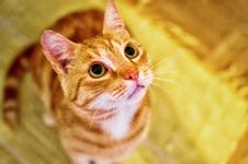 Free Curious Tabby Royalty Free Stock Photo - 92881735