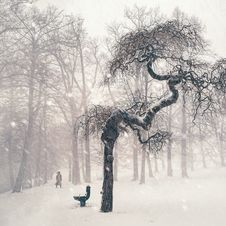 Free Bare Trees On Snow Covered Landscape Stock Image - 92881861