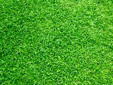 Free Green Grass Stock Photography - 92882142