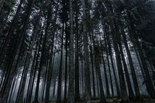Free Low Angle View Of Trees In Forest Against Sky Royalty Free Stock Photo - 92882775