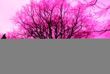 Free Brightly Coloured Trees Stock Photos - 92883223