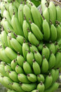 Free Green Bananas Stock Photos - 9291273